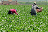 Photo of seasonal agriculture workers